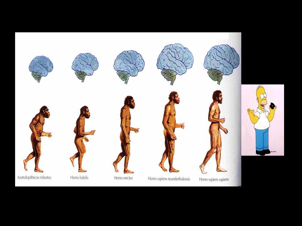 """""""Kolébka člověka Nejstarší formy člověka byly nalezeny v Africe - odtud se forma homo šířila na ostatní kontinenty Homo habilis (zručný) - první výrobce nástrojů, nálezy v Africe - 3 – 1 milion let př."""