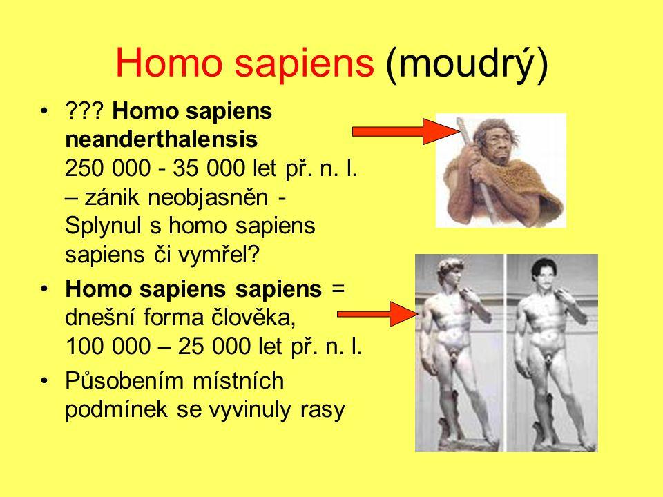 Homo sapiens (moudrý) ??? Homo sapiens neanderthalensis 250 000 - 35 000 let př. n. l. – zánik neobjasněn - Splynul s homo sapiens sapiens či vymřel?