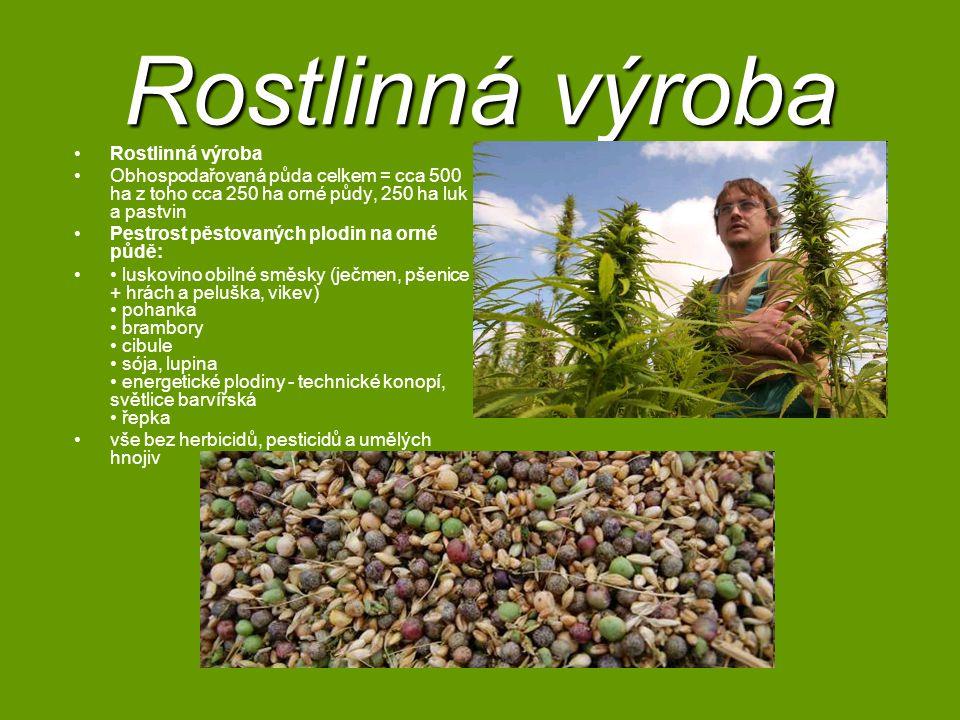 Rostlinná výroba Obhospodařovaná půda celkem = cca 500 ha z toho cca 250 ha orné půdy, 250 ha luk a pastvin Pestrost pěstovaných plodin na orné půdě: luskovino obilné směsky (ječmen, pšenice + hrách a peluška, vikev) pohanka brambory cibule sója, lupina energetické plodiny - technické konopí, světlice barvířská řepka vše bez herbicidů, pesticidů a umělých hnojiv