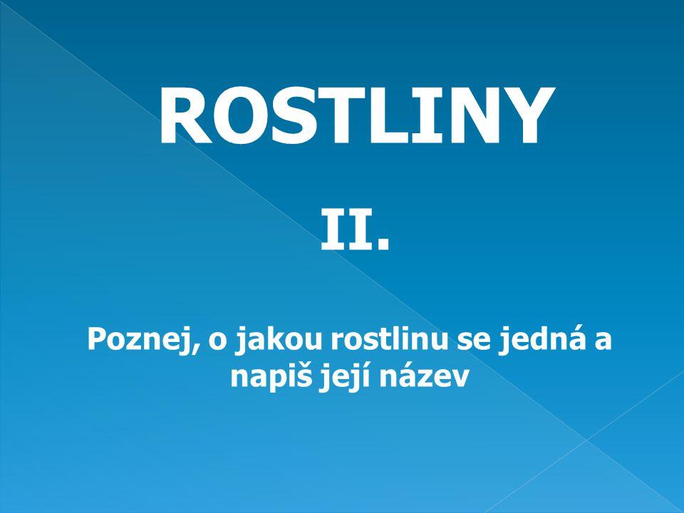 ROSTLINY II. Poznej, o jakou rostlinu se jedná a napiš její název