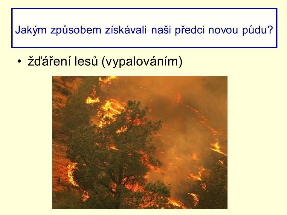 žďáření lesů (vypalováním) Jakým způsobem získávali naši předci novou půdu?