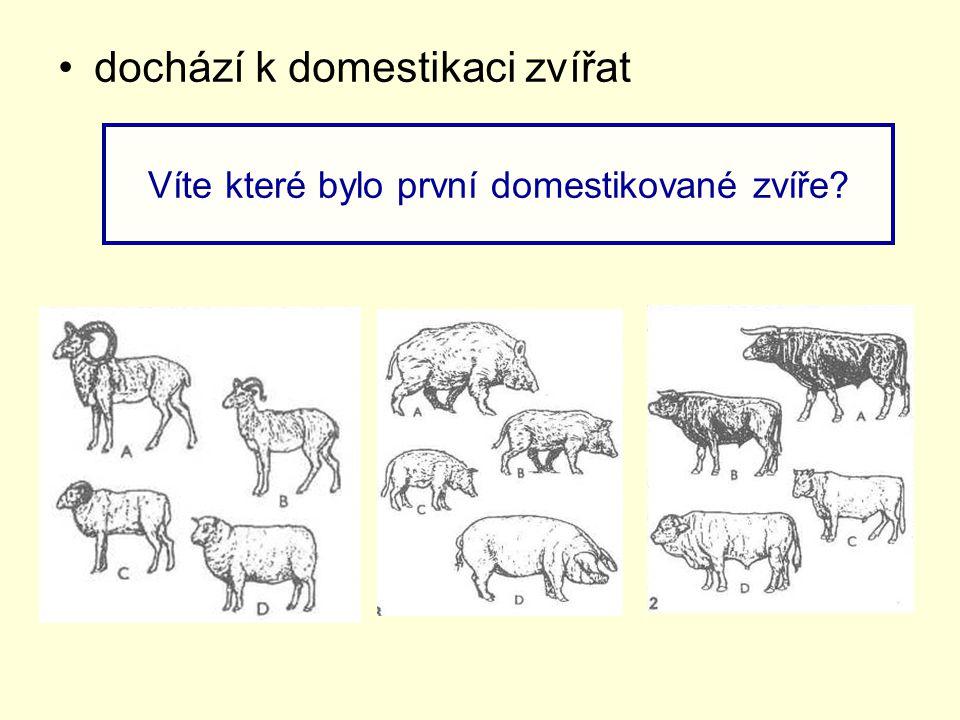 dochází k domestikaci zvířat Víte které bylo první domestikované zvíře?