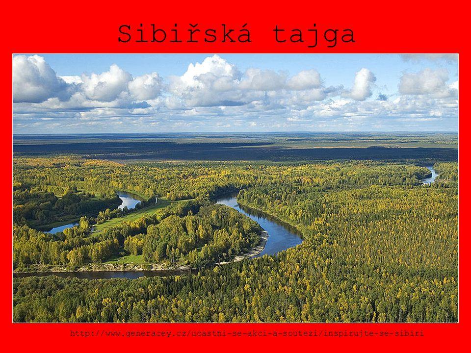 Sibiřská tajga http://www.generacey.cz/ucastni-se-akci-a-soutezi/inspirujte-se-sibiri