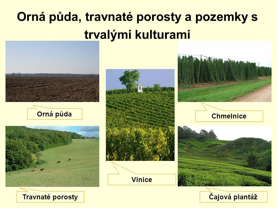 Orná půda, travnaté porosty a pozemky s trvalými kulturami Orná půda Travnaté porosty Vinice Chmelnice Čajová plantáž