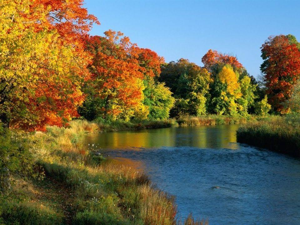 Východní část Kanady tvoří nížiny(Arktická) ale i vysočiny(Laurentinská).(Tajga, lesy listnaté, jehličnaté a smíšené, tundry, lesotundry).