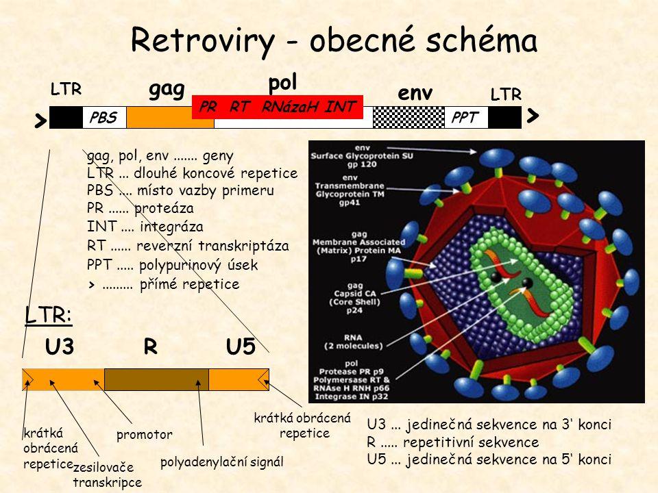 U3... jedinečná sekvence na 3' konci R..... repetitivní sekvence U5... jedinečná sekvence na 5' konci LTR gag LTR pol env PR RT RNázaH INT PBSPPT > >