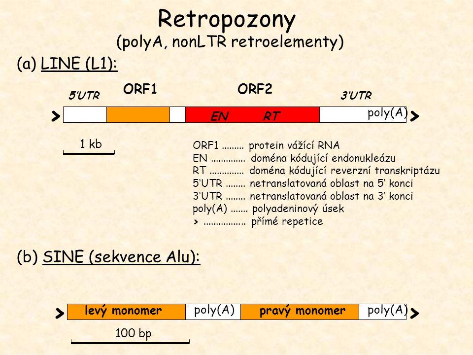 ORF1......... protein vážící RNA EN.............. doména kódující endonukleázu RT.............. doména kódující reverzní transkriptázu 5'UTR........ n