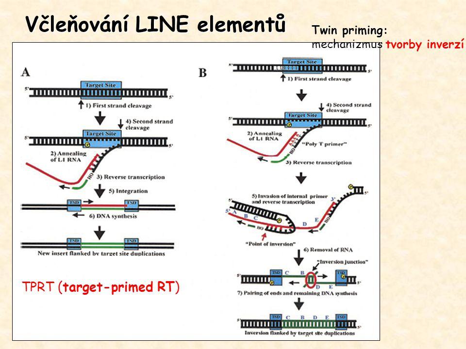 Včleňování LINE elementů TPRT (target-primed RT) Twin priming: mechanizmus tvorby inverzí