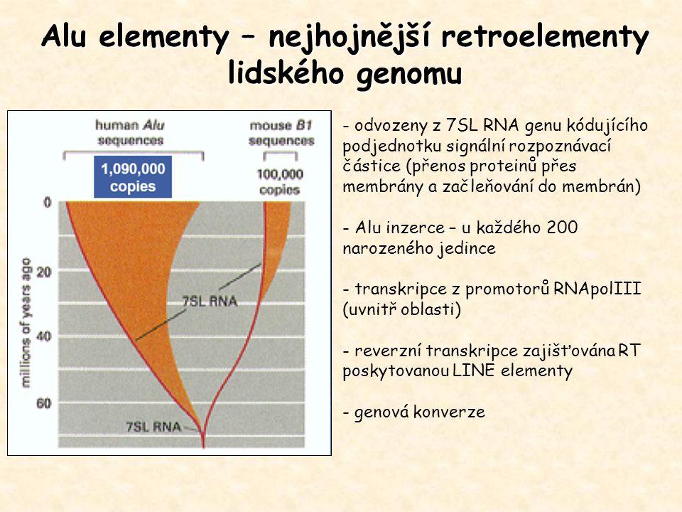 Alu elementy – nejhojnější retroelementy lidského genomu - odvozeny z 7SL RNA genu kódujícího podjednotku signální rozpoznávací částice (přenos protei
