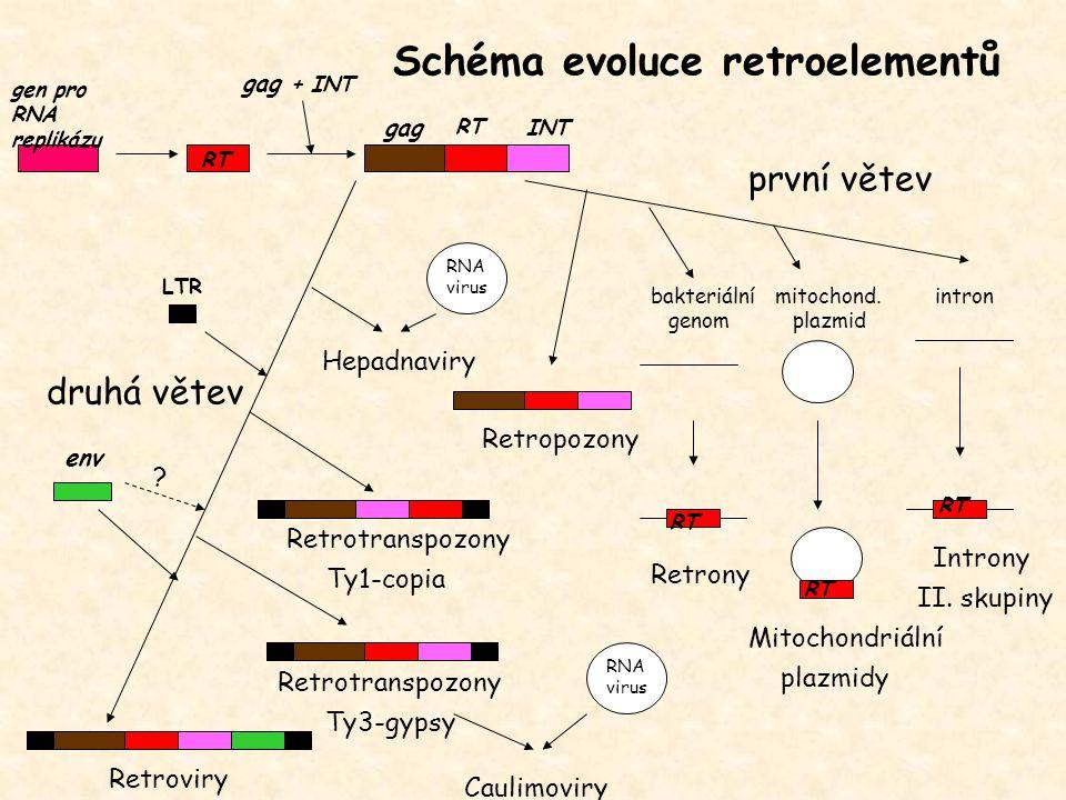 RT LTR INT Retropozony Retrotranspozony Ty1-copia Retrotranspozony Ty3-gypsy Retroviry gen pro RNA replikázu gag env RT gag + INT Caulimoviry Hepadnav
