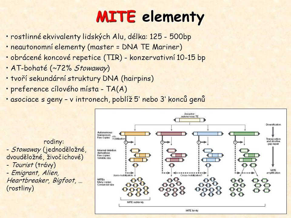 rostlinné ekvivalenty lidských Alu, délka: 125 - 500bp neautonomní elementy (master = DNA TE Mariner) obrácené koncové repetice (TIR) - konzervativní
