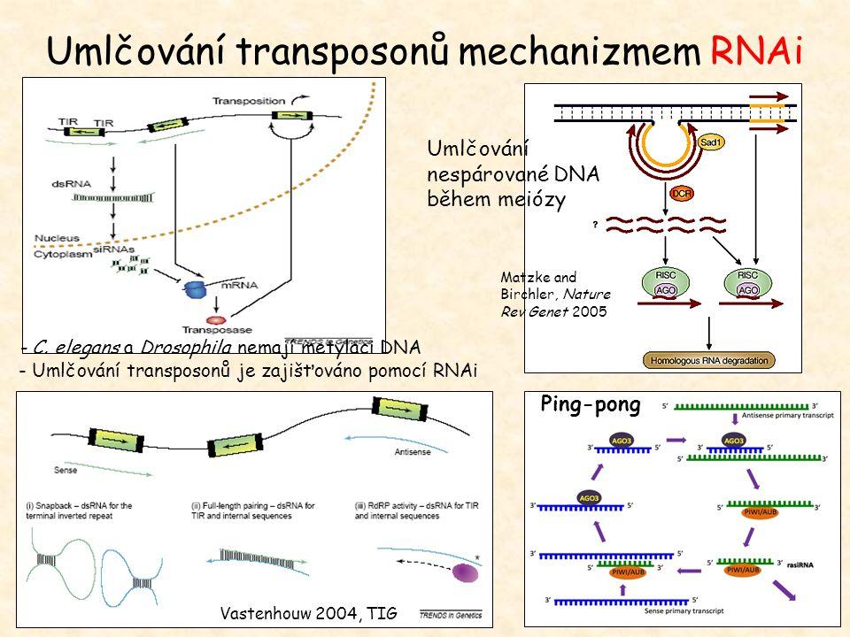 Vastenhouw 2004, TIG Umlčování nespárované DNA během meiózy Matzke and Birchler, Nature Rev Genet 2005 Umlčování transposonů mechanizmem RNAi - C. ele