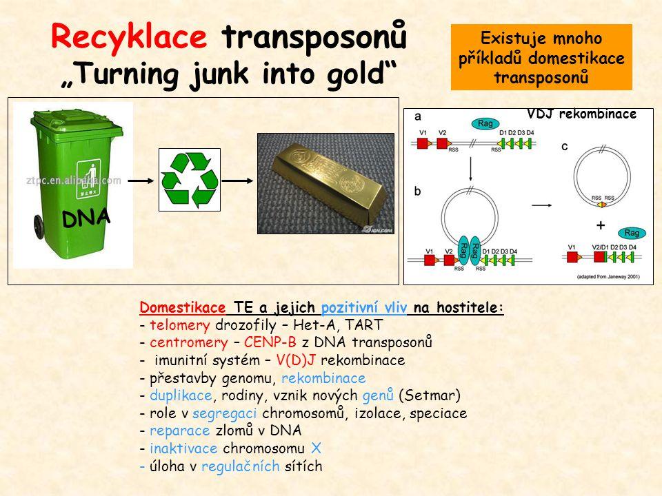 """Recyklace transposonů """"Turning junk into gold"""" DNA Domestikace TE a jejich pozitivní vliv na hostitele: - telomery drozofily – Het-A, TART - centromer"""