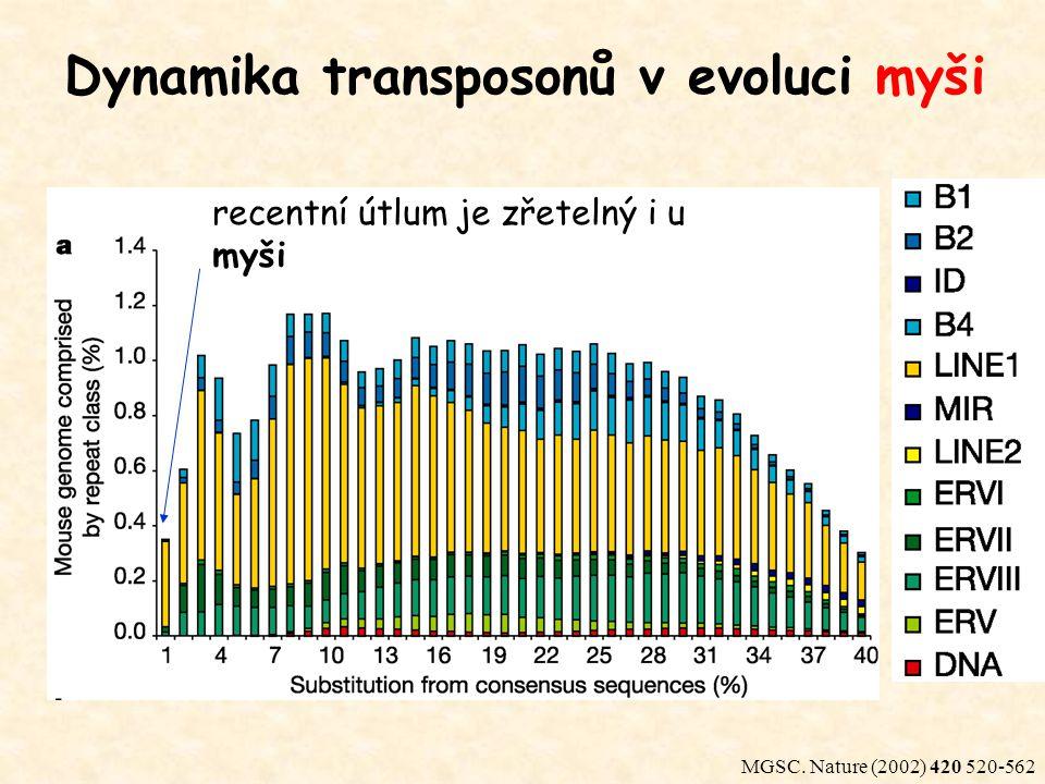 MGSC. Nature (2002) 420 520-562 recentní útlum je zřetelný i u myši Dynamika transposonů v evoluci myši