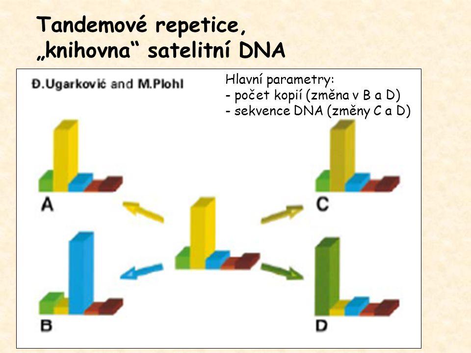 """Tandemové repetice, """"knihovna"""" satelitní DNA Hlavní parametry: - počet kopií (změna v B a D) - sekvence DNA (změny C a D)"""