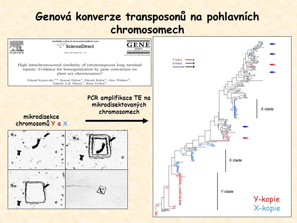 Genová konverze transposonů na pohlavních chromosomech mikrodisekce chromosomů Y a X PCR amplifikace TE na mikrodisektovaných chromosomech Y-kopie X-k