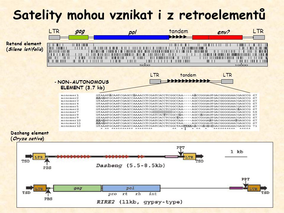 Satelity mohou vznikat i z retroelementů gag LTR tandem - NON-AUTONOMOUS ELEMENT (3.7 kb) pol env? tandem Retand element (Silene latifolia) Dasheng el