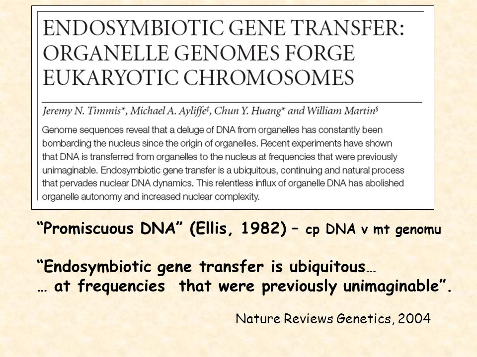 """""""Promiscuous DNA"""" (Ellis, 1982) – cp DNA v mt genomu """"Endosymbiotic gene transfer is ubiquitous… … at frequencies that were previously unimaginable""""."""