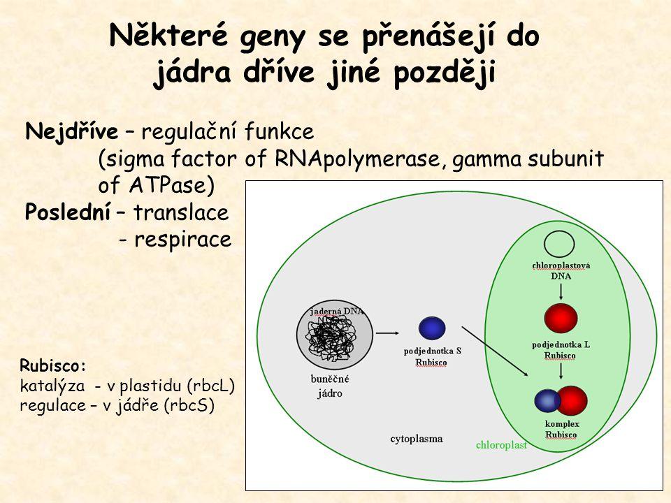 Nejdříve – regulační funkce (sigma factor of RNApolymerase, gamma subunit of ATPase) Poslední – translace - respirace Některé geny se přenášejí do jád