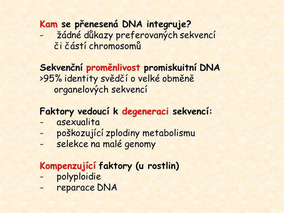 Kam se přenesená DNA integruje? - žádné důkazy preferovaných sekvencí či částí chromosomů Sekvenční proměnlivost promiskuitní DNA >95% identity svědčí