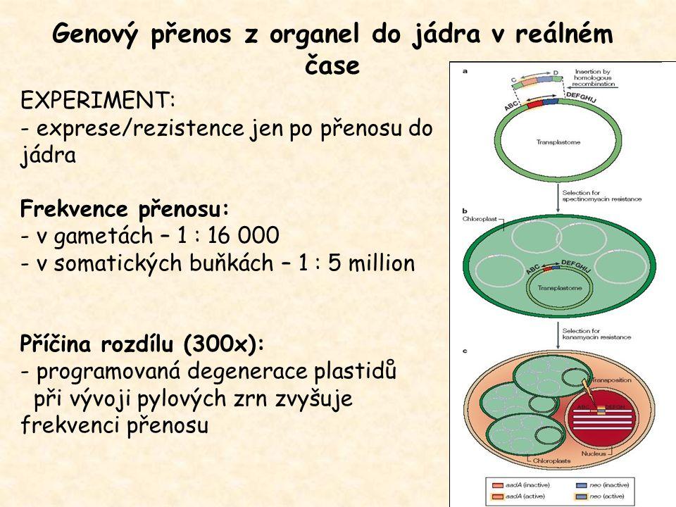Genový přenos z organel do jádra v reálném čase EXPERIMENT: - exprese/rezistence jen po přenosu do jádra Frekvence přenosu: - v gametách – 1 : 16 000