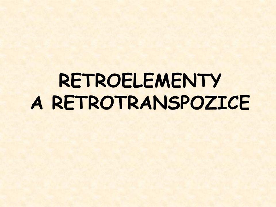 RT LTR INT Retropozony Retrotranspozony Ty1-copia Retrotranspozony Ty3-gypsy Retroviry gen pro RNA replikázu gag env RT gag + INT Caulimoviry Hepadnaviry RNA virus Retrony Introny II.