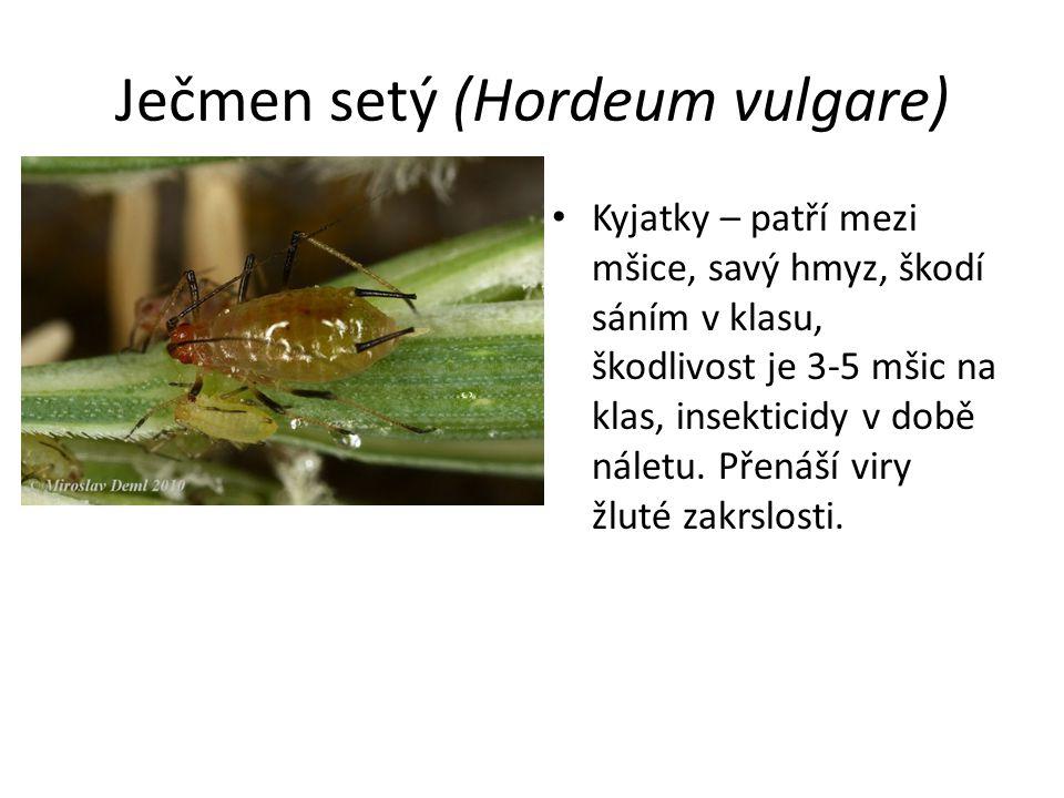 Ječmen setý (Hordeum vulgare) Kyjatky – patří mezi mšice, savý hmyz, škodí sáním v klasu, škodlivost je 3-5 mšic na klas, insekticidy v době náletu. P