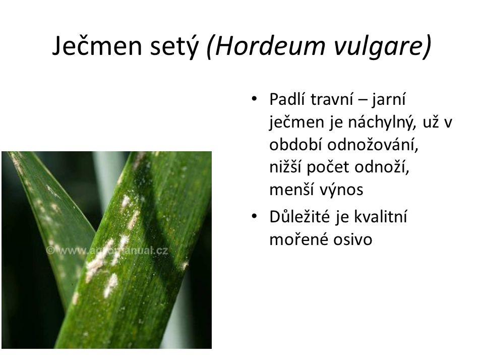 Ječmen setý (Hordeum vulgare) Padlí travní – jarní ječmen je náchylný, už v období odnožování, nižší počet odnoží, menší výnos Důležité je kvalitní mo