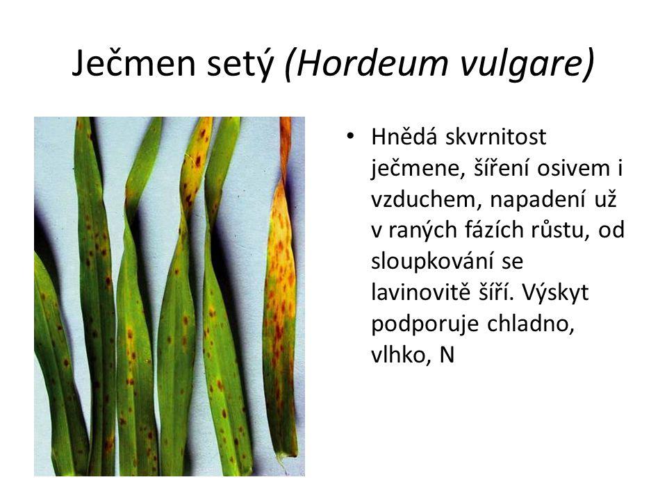 Ječmen setý (Hordeum vulgare) Hnědá skvrnitost ječmene, šíření osivem i vzduchem, napadení už v raných fázích růstu, od sloupkování se lavinovitě šíří