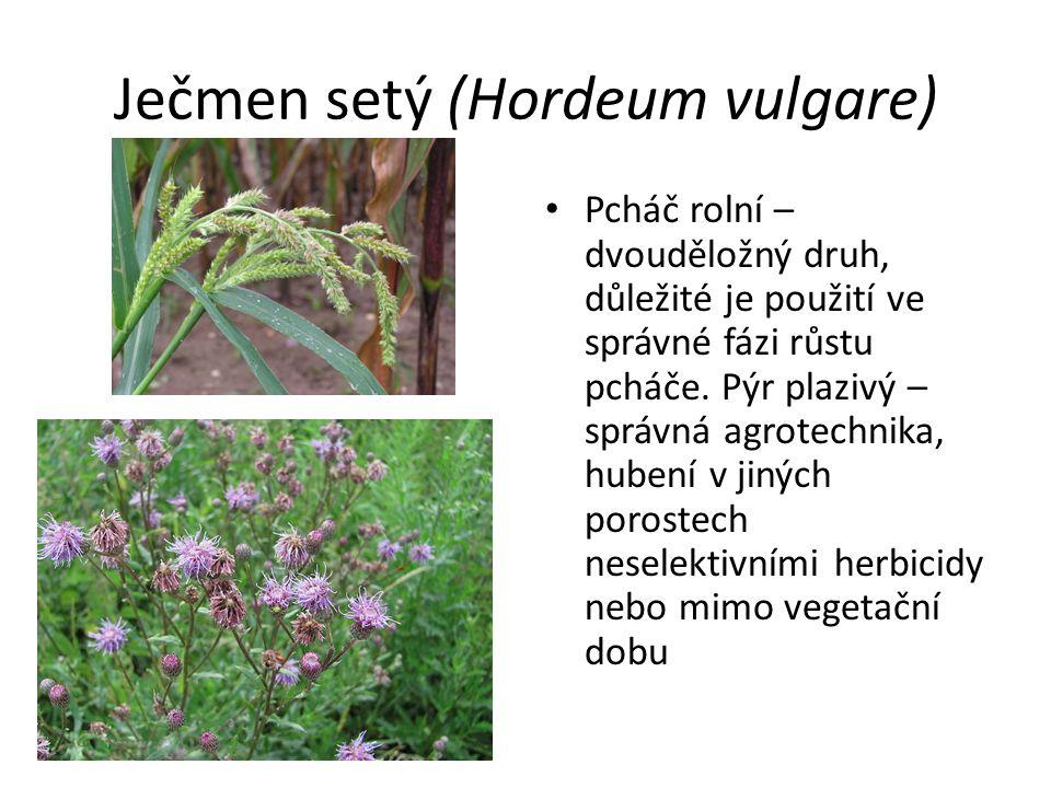 Ječmen setý (Hordeum vulgare) Pcháč rolní – dvouděložný druh, důležité je použití ve správné fázi růstu pcháče. Pýr plazivý – správná agrotechnika, hu