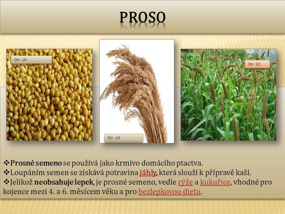  Prosné semeno se používá jako krmivo domácího ptactva.