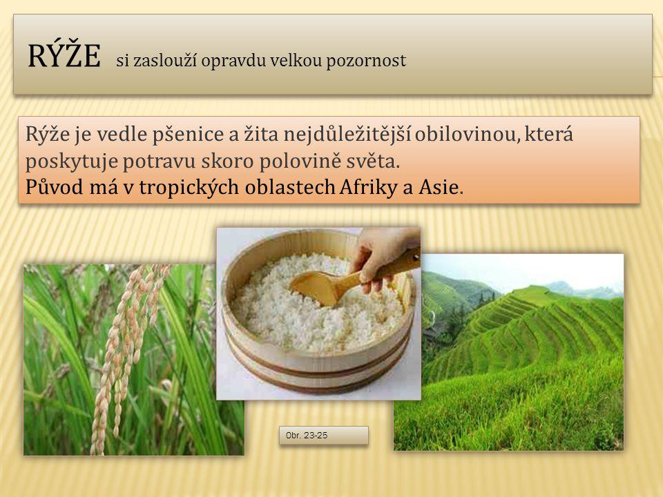 Rýže je vedle pšenice a žita nejdůležitější obilovinou, která poskytuje potravu skoro polovině světa.