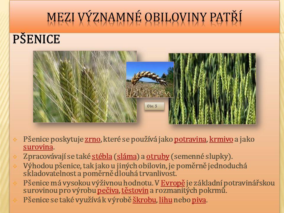 PŠENICE  Pšenice poskytuje zrno, které se používá jako potravina, krmivo a jako surovina.zrnopotravinakrmivo surovina  Zpracovávají se také stébla (sláma) a otruby (semenné slupky).stéblaslámaotruby  Výhodou pšenice, tak jako u jiných obilovin, je poměrně jednoduchá skladovatelnost a poměrně dlouhá trvanlivost.