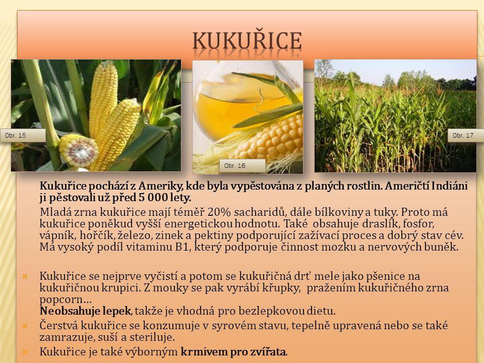 Kukuřice pochází z Ameriky, kde byla vypěstována z planých rostlin.