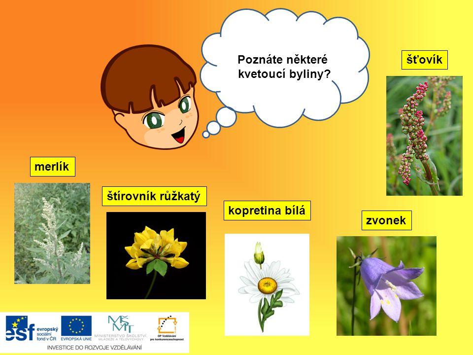 Ahoj, Na louce rostou květiny, kterým se říká -kvetoucí byliny. Víte, jaký je rozdíl mezi dřevinou a bylinou?  byliny mají nedřevnatý stonek  liší s