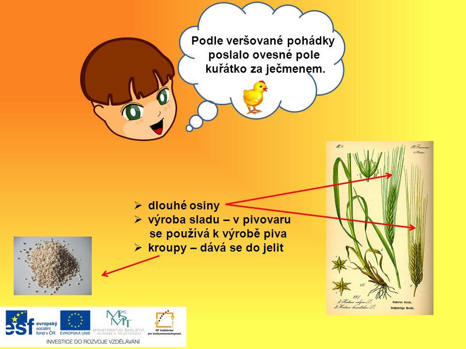 Ahoj, Když jsme nemocní, pijeme bylinkový čaj.Některé byliny mají léčivé účinky.