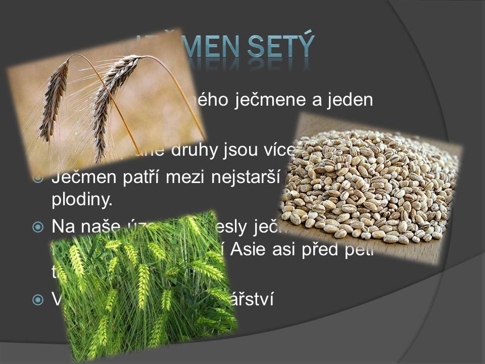  Má 25 druhů planého ječmene a jeden druh kulturní  některé plané druhy jsou víceleté  Ječmen patří mezi nejstarší zemědělské plodiny.