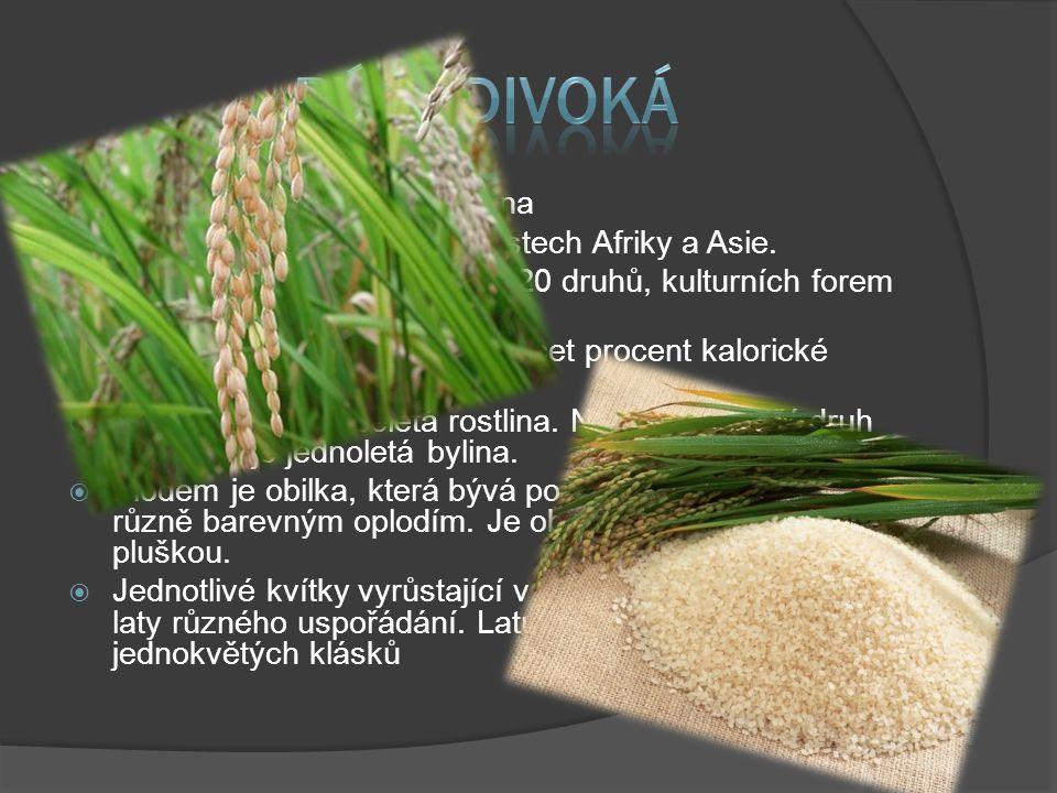  Rýže je jednoděložná rostlina  Původ má v tropických oblastech Afriky a Asie.  V botanice se rozlišuje přes 20 druhů, kulturních forem jsou deseti