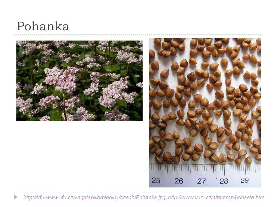 Pohanka http://vfu-www.vfu.cz/vegetabilie/plodiny/czech/Pohanka.jpghttp://vfu-www.vfu.cz/vegetabilie/plodiny/czech/Pohanka.jpg, http://www.vurv.cz/alt