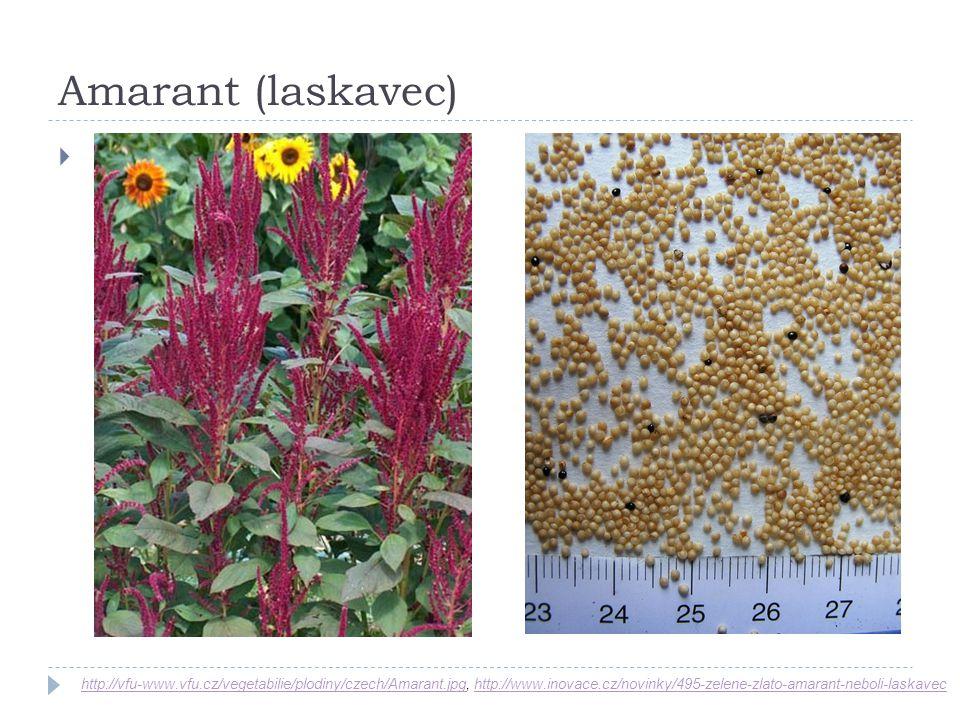 Amarant (laskavec) http://vfu-www.vfu.cz/vegetabilie/plodiny/czech/Amarant.jpghttp://vfu-www.vfu.cz/vegetabilie/plodiny/czech/Amarant.jpg, http://www.
