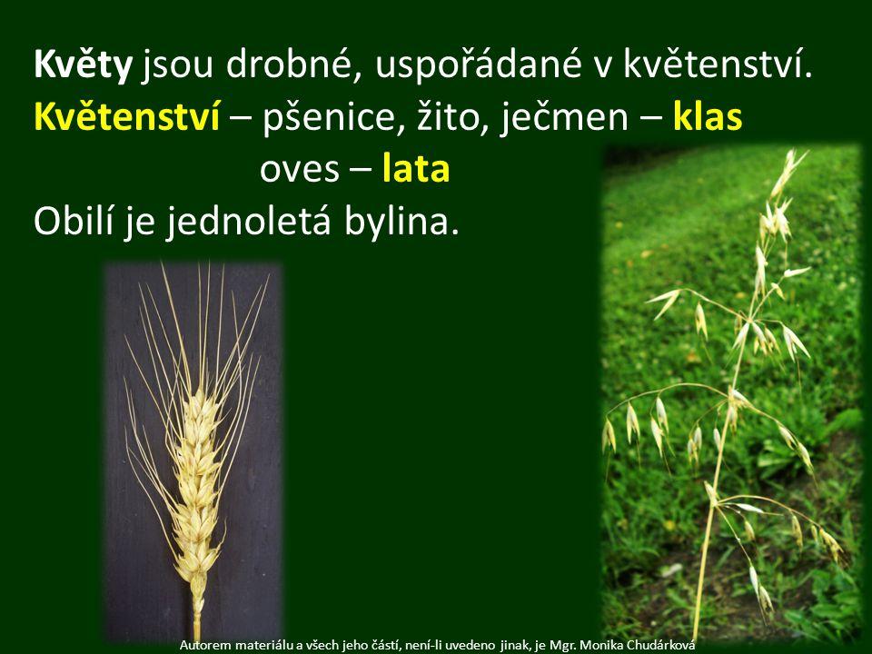 Autorem materiálu a všech jeho částí, není-li uvedeno jinak, je Mgr. Monika Chudárková Květy jsou drobné, uspořádané v květenství. Květenství – pšenic