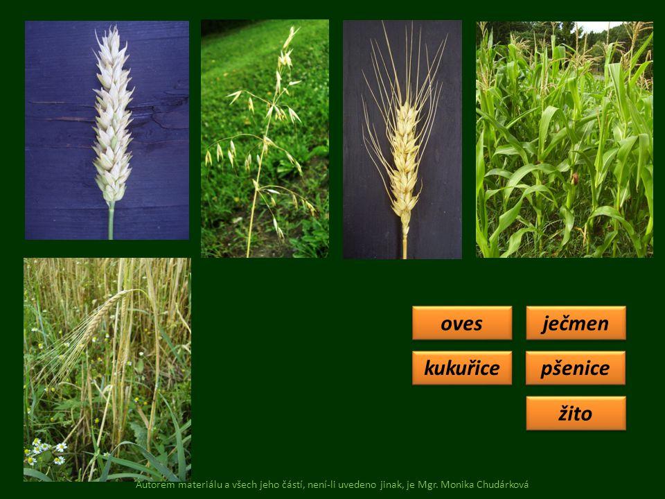 pšenice oves žito ječmen Co k čemu patří.