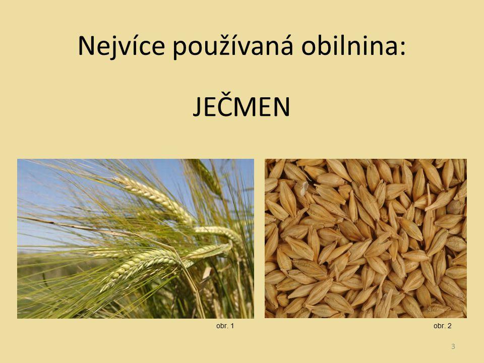 Nejvíce používaná obilnina: JEČMEN 3 obr. 1obr. 2