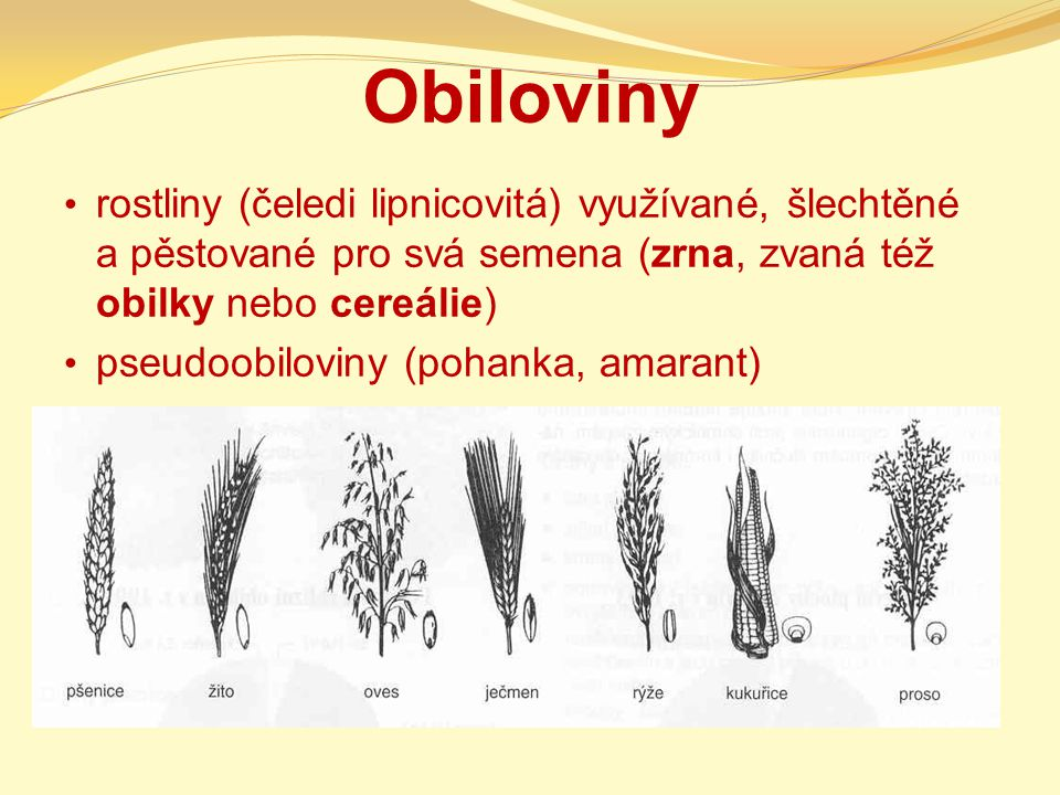 Obiloviny rostliny (čeledi lipnicovitá) využívané, šlechtěné a pěstované pro svá semena (zrna, zvaná též obilky nebo cereálie) pseudoobiloviny (pohank