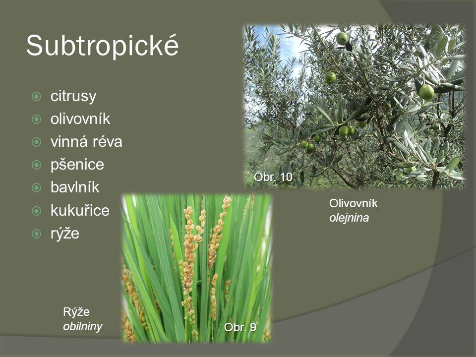 Subtropické  citrusy  olivovník  vinná réva  pšenice  bavlník  kukuřice  rýže Rýže obilniny Obr. 9 Olivovník olejnina Obr. 10