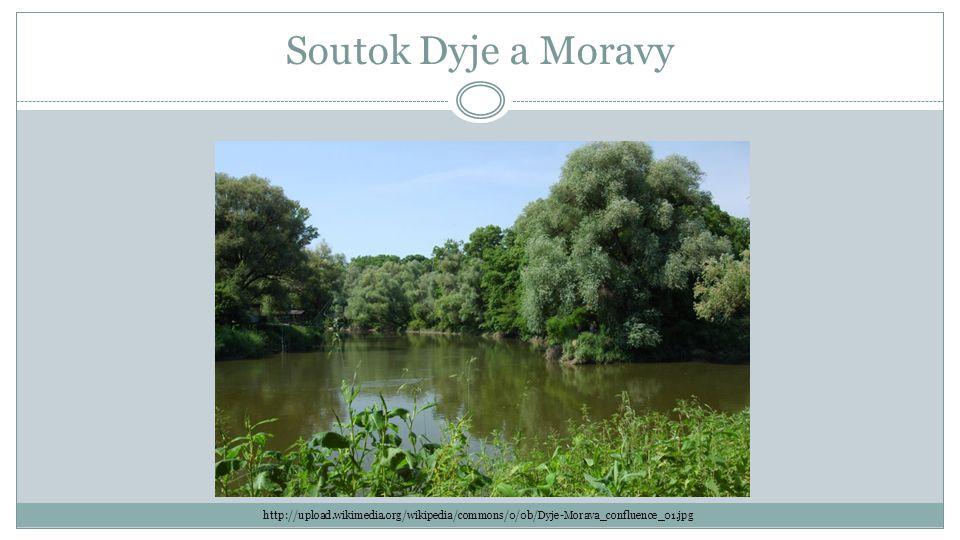 Soutok Dyje a Moravy http://upload.wikimedia.org/wikipedia/commons/0/0b/Dyje-Morava_confluence_01.jpg