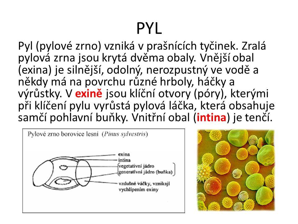 PYL Pyl (pylové zrno) vzniká v prašnících tyčinek. Zralá pylová zrna jsou krytá dvěma obaly. Vnější obal (exina) je silnější, odolný, nerozpustný ve v