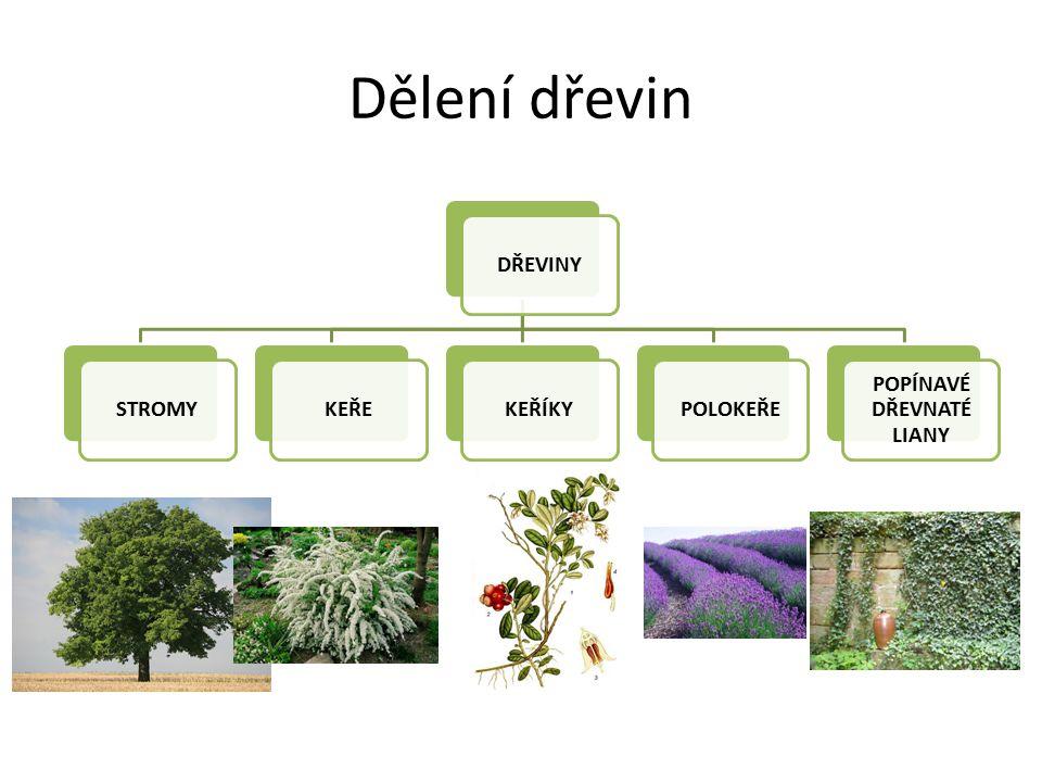 Srovnání nahosemenných a krytosemenných NAHOSEMENNÉ Vajíčka jsou volná na plodolistu Oplození - jen jedna samičí gameta, druhá ZANIKÁ Semena jsou NAHÁ Dřevo má tracheidy (cévice) = vedou vodu k místu spotřeby) Vývojově starší KRYTOSEMENNÉ Vajíčka jsou ukrytá v semeníku DVĚ SAMČÍ GAMETY (dvojí oplození) Semena jsou v plodech Dřevo je tvořeno trachejemi (cévy) = vedou vodu Vývojově mladší