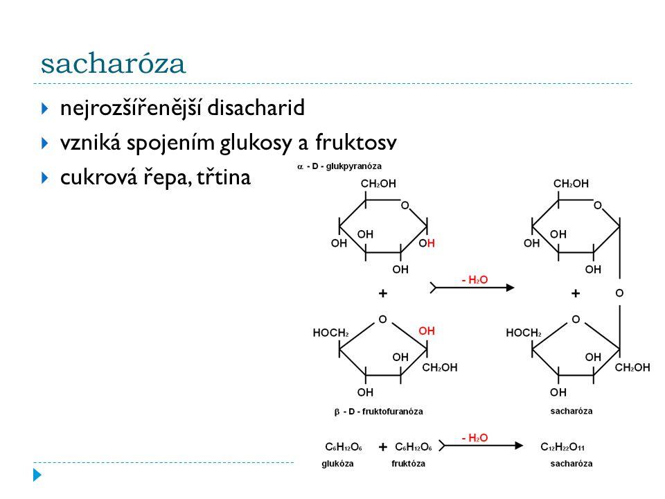 sacharóza  nejrozšířenější disacharid  vzniká spojením glukosy a fruktosy  cukrová řepa, třtina