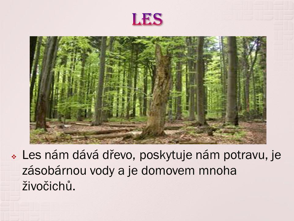  Les nám dává dřevo, poskytuje nám potravu, je zásobárnou vody a je domovem mnoha živočichů.